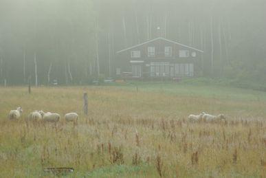 朝霧の牧場とお宿