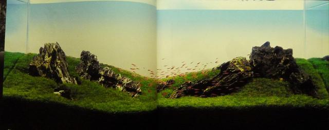 草原のレイアウト!