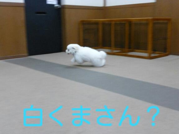 20140320000822ae5.jpg