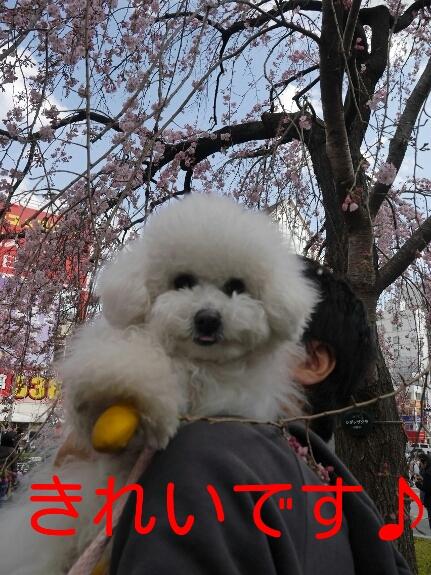 20140325004158931.jpg