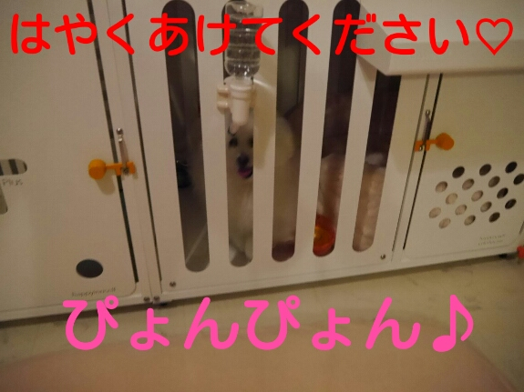 20140401131250dc2.jpg