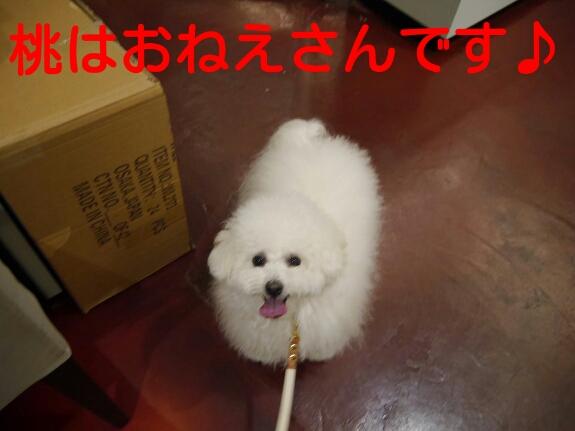 20140405013634b81.jpg