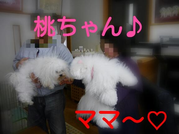 20140409000244e40.jpg