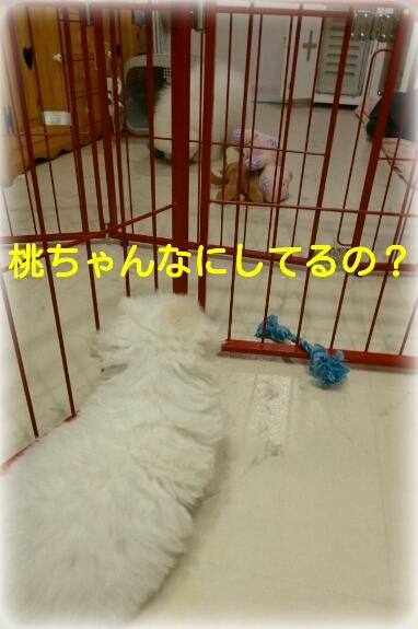 20140506135659763.jpg