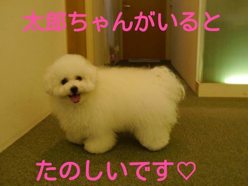 201407071801095c6.jpg
