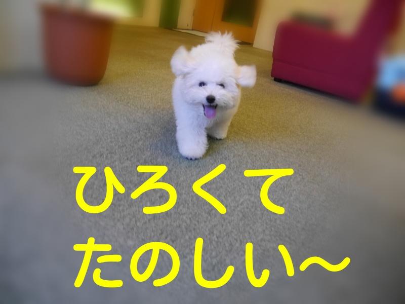 201407071801478e9.jpg