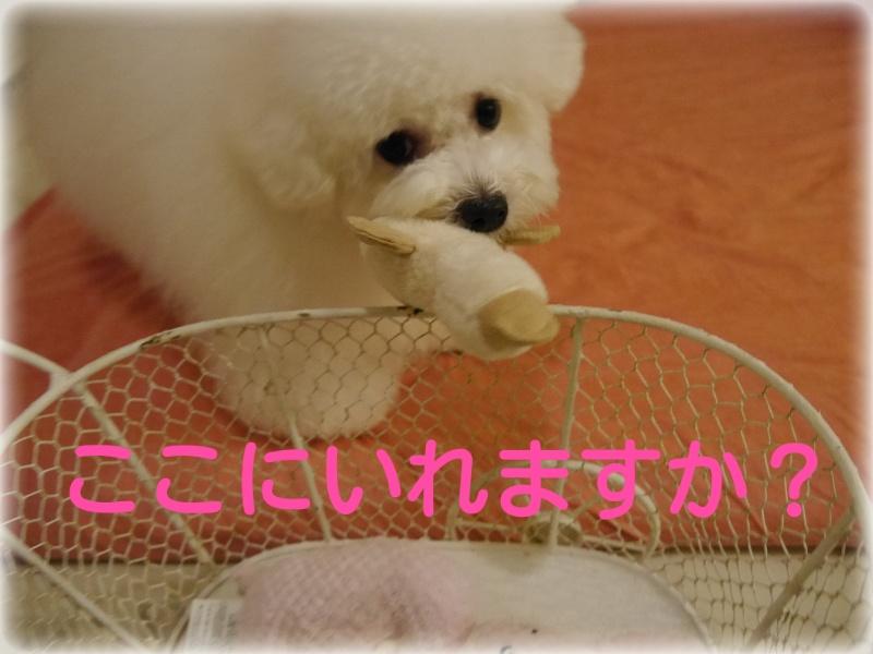 201409101646404a8.jpg
