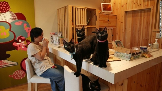 08cat-cafe-japan-horizontal-gallery.jpg