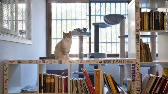 cat-cafes-la-gatoteca-madrid.jpg