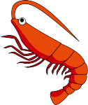 shrimp_a02.png