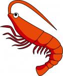 shrimp_a02.png