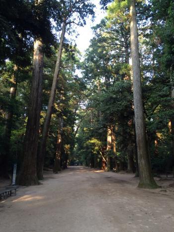 樹木140609