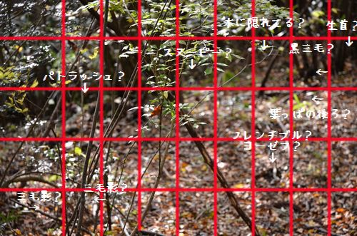 131116_8510a1.jpg