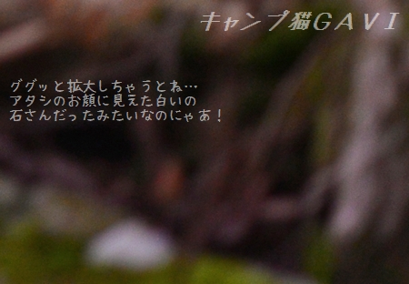 140803_5239a1.jpg