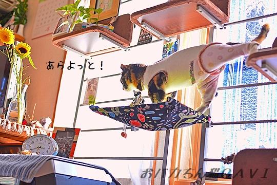 140821_5916.jpg