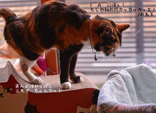DSC_0062a.jpg