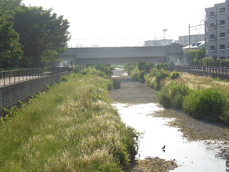 空堀川6月