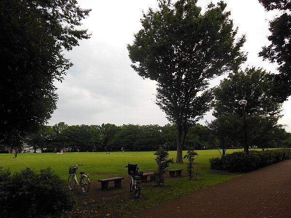 中央公園の夏