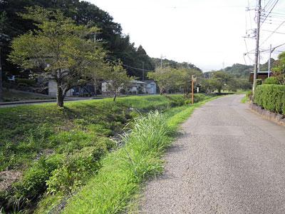kawazoi.jpg