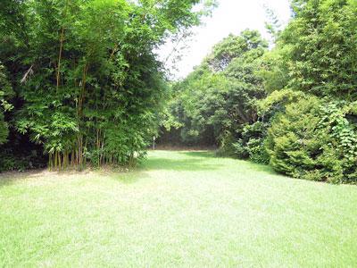 竹類植物園内1