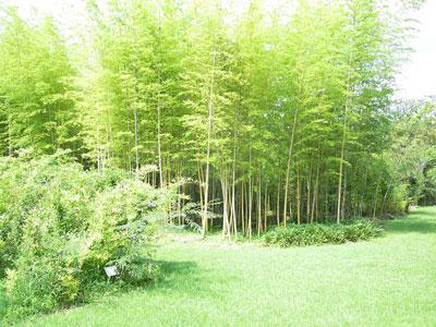 竹類植物園内2