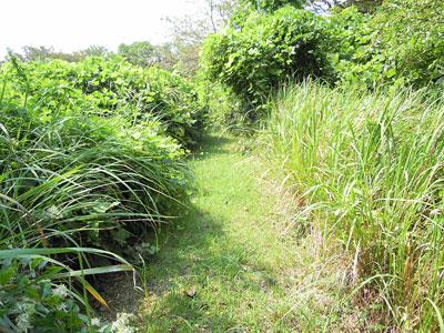 竹類植物園内3