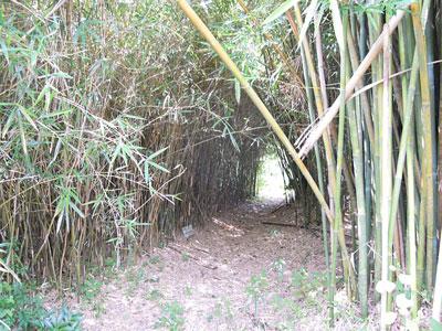 富士竹類植物園内4