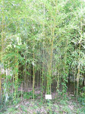 竹類植物園内5