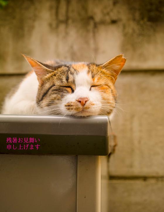 残暑お見舞い申し上げます 姫 (C)表参道・青山・原宿・外苑前・渋谷・東京都内のはりきゅう院 源保堂鍼灸院 肩こり・腰痛・生理痛・不定愁訴・頭痛・眼精疲労・不妊症