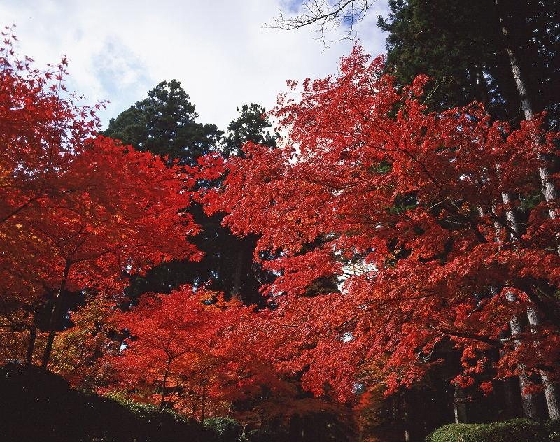 高野山 蛇腹道の紅葉3