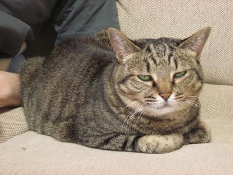 チェシャ猫ハチ