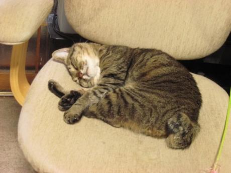 椅子の上でぐっすりハチ