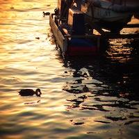 大阪港水鳥
