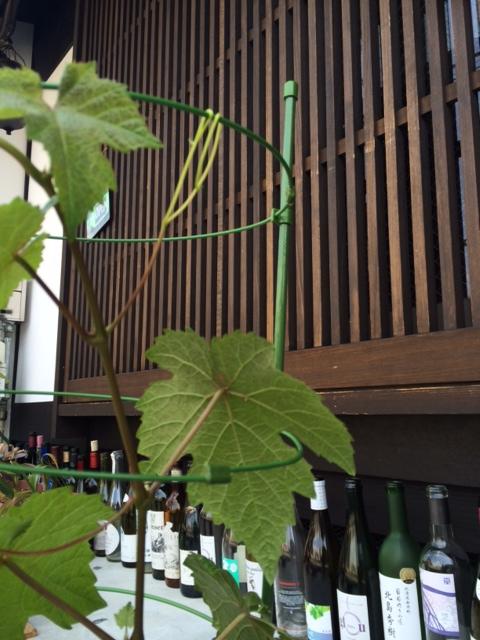 2014 05 10 ぶどうの木