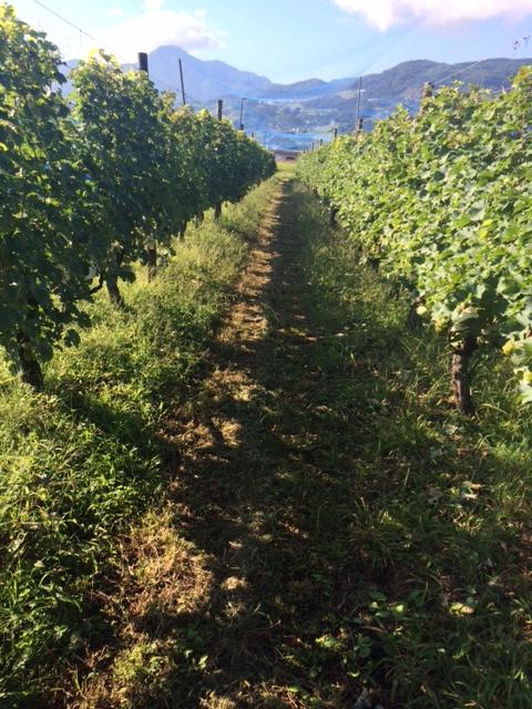 2014 09 11-1 収穫