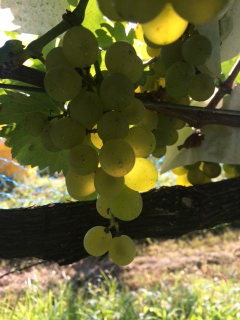 2014 09 11-2 収穫
