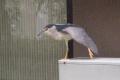 14-8-15-329謎の鳥