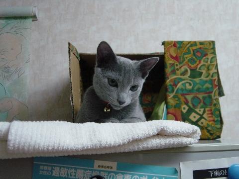 なつかしニコライくん(2007.10.23)