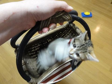 撫子さん、2歳のお誕生日おめでとう♪03(2012.06.26)