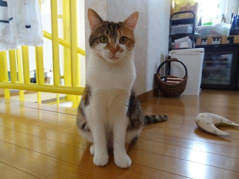 撫子さん、2歳のお誕生日おめでとう♪05(2013.04.02)