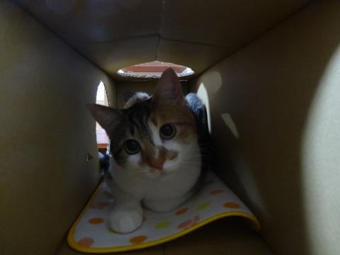 CAT LOG HOUSE01(2014.02.19)
