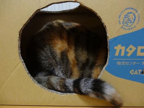 CAT LOG HOUSE02(2014.02.19)
