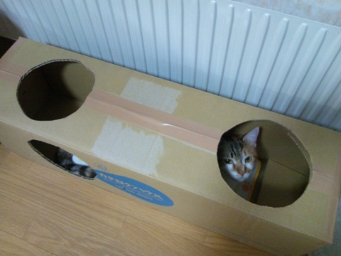 CAT LOG HOUSE04(2014.02.19)
