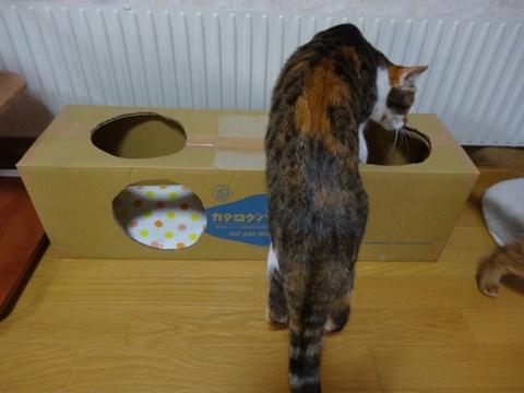 CAT LOG HOUSE05(2014.02.19)