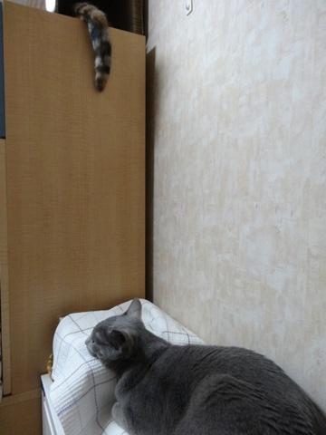 何みてんの04(2014.02.20)
