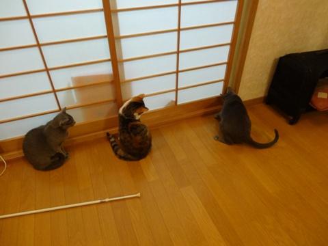 開かずの間への挑戦03(2014.03.01)