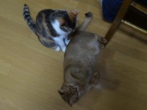 末妹はかわいい♪03(2014.03.11)