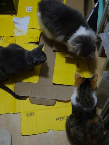 分身でもスキスキ♪01(2014.03.14)