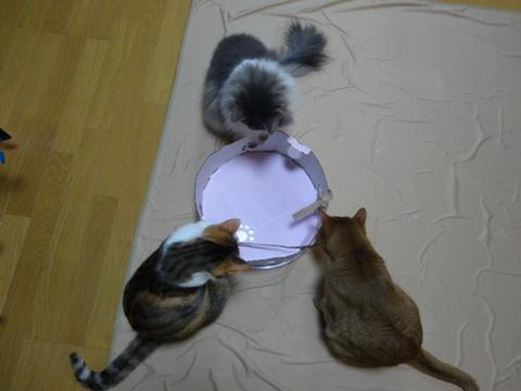 おんにゃ3にゃん集まると01(2014.04.01)