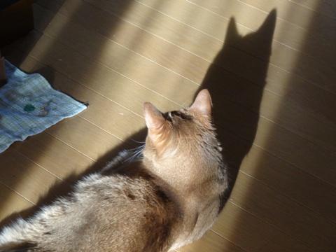 春の猫神様~♪02(2014.04.14)